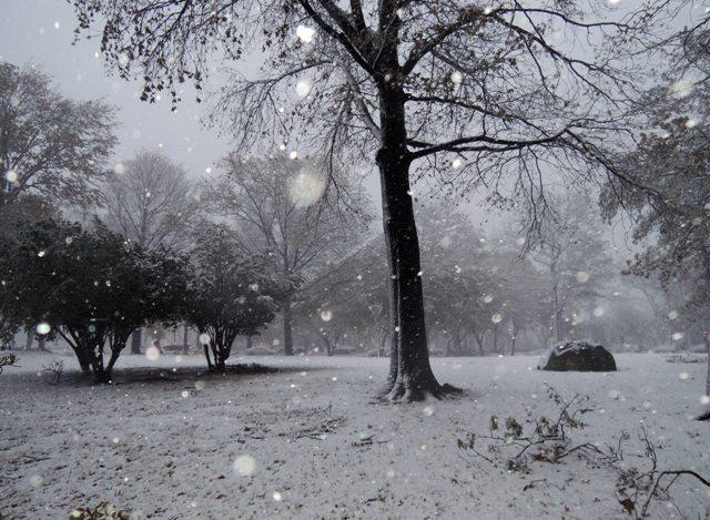 ②.ハリケーンと吹雪からのギフト?!_b0173754_156202.jpg