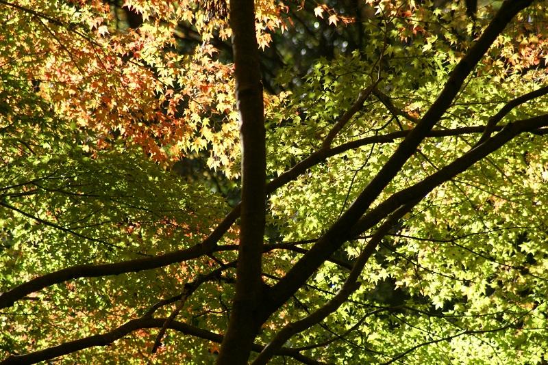 花園地区紅葉の便り… 北茨城市_b0183886_014583.jpg
