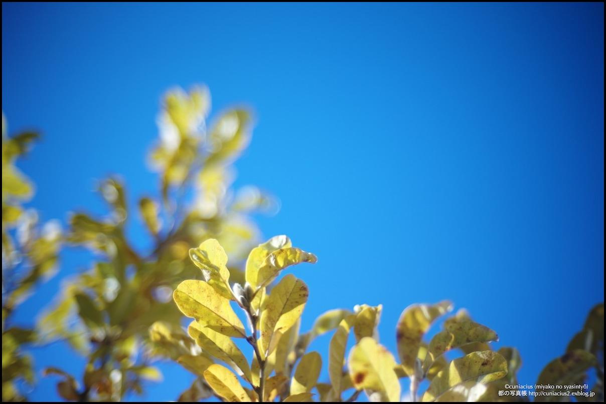 春の予感_f0042194_19255974.jpg