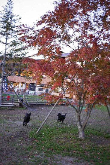 秋色のWoofへ行ってきました_c0050400_0132041.jpg