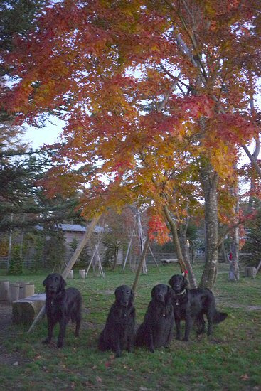 秋色のWoofへ行ってきました_c0050400_0133456.jpg