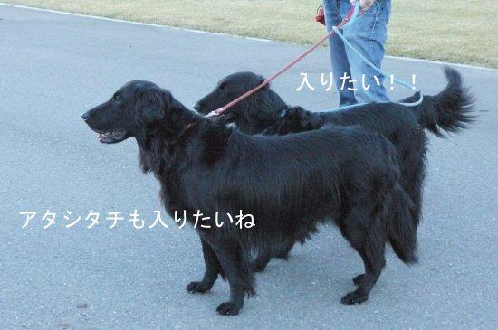 新横浜公園へお散歩♪_c0050400_1392378.jpg