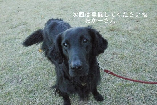 新横浜公園へお散歩♪_c0050400_1395395.jpg