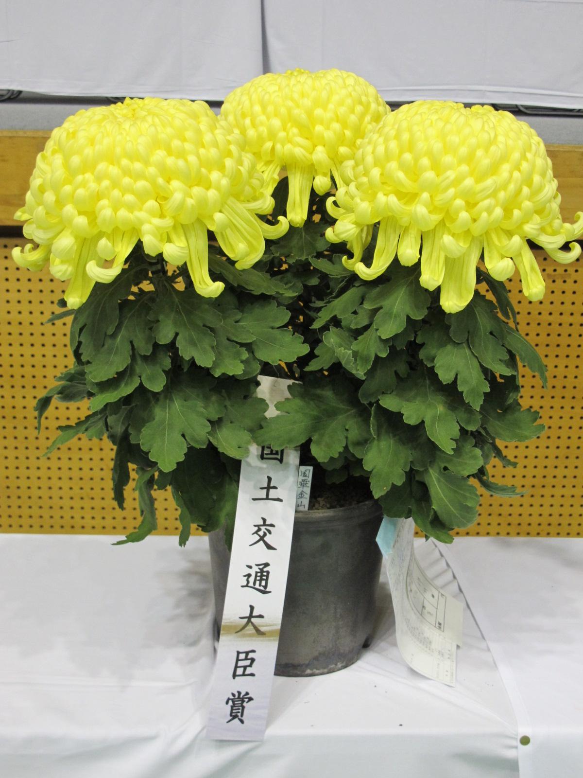 第100回 南陽の菊まつり展(6)_c0075701_1731468.jpg