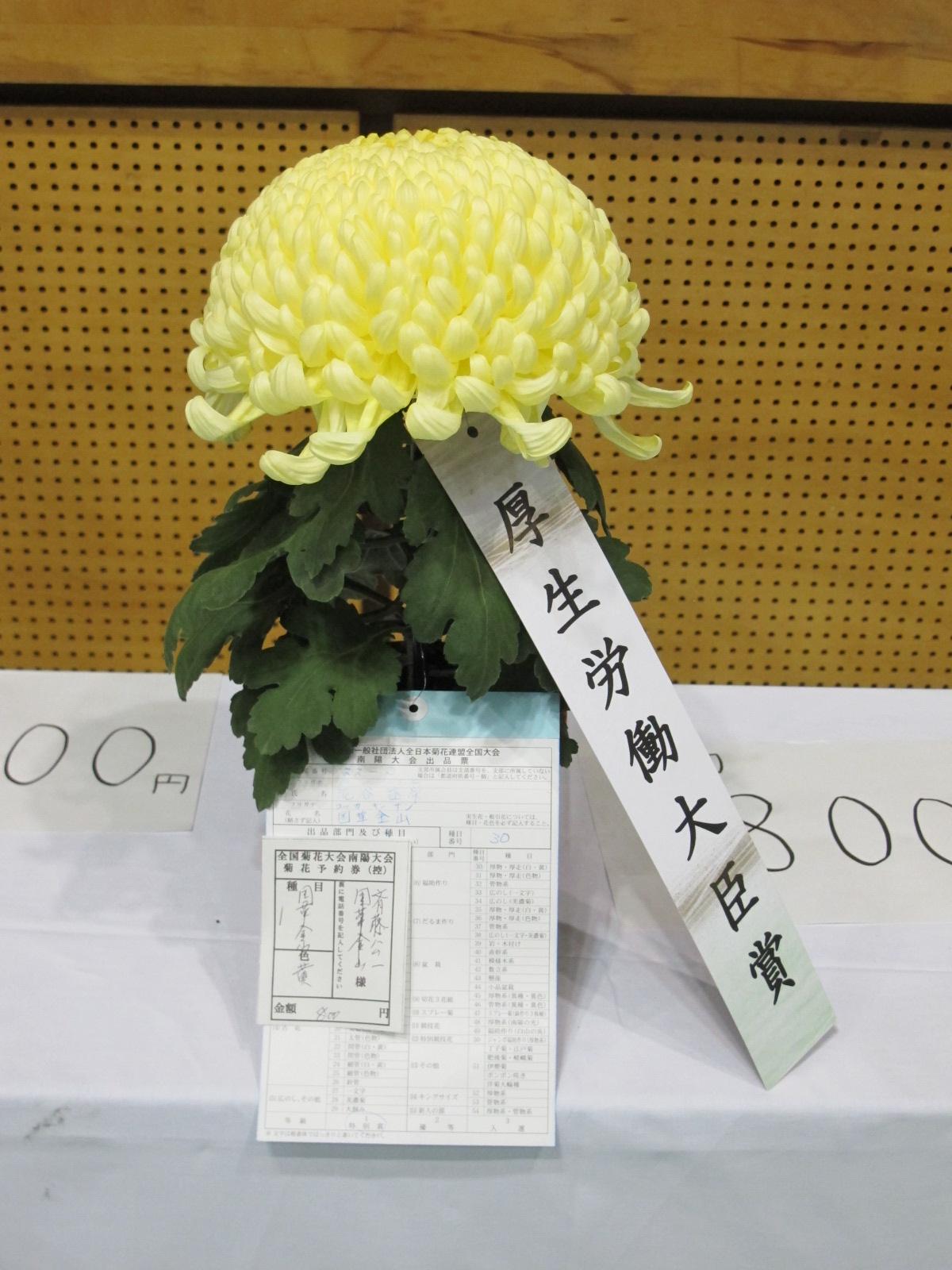 第100回 南陽の菊まつり展(6)_c0075701_1732536.jpg