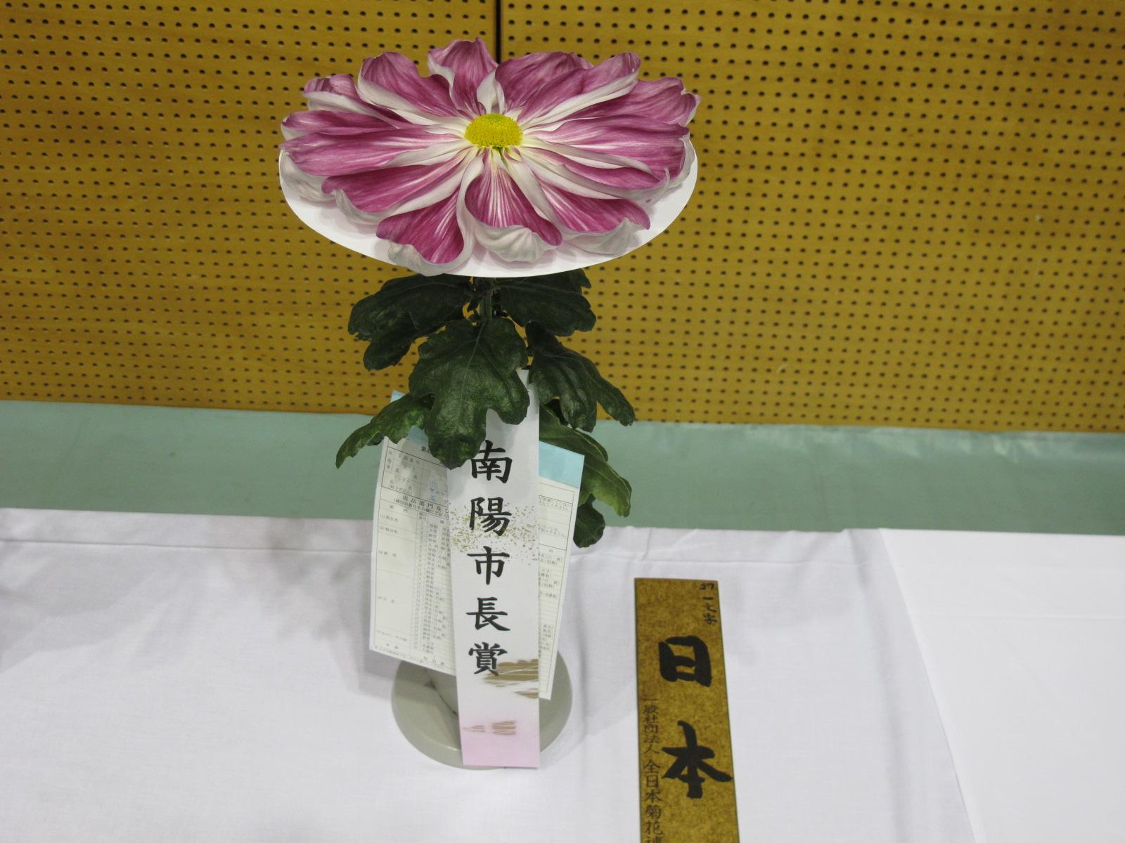 第100回 南陽の菊まつり展(10)_c0075701_18334245.jpg
