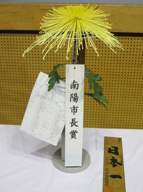 第100回 南陽の菊まつり展(11)_c0075701_20141716.jpg