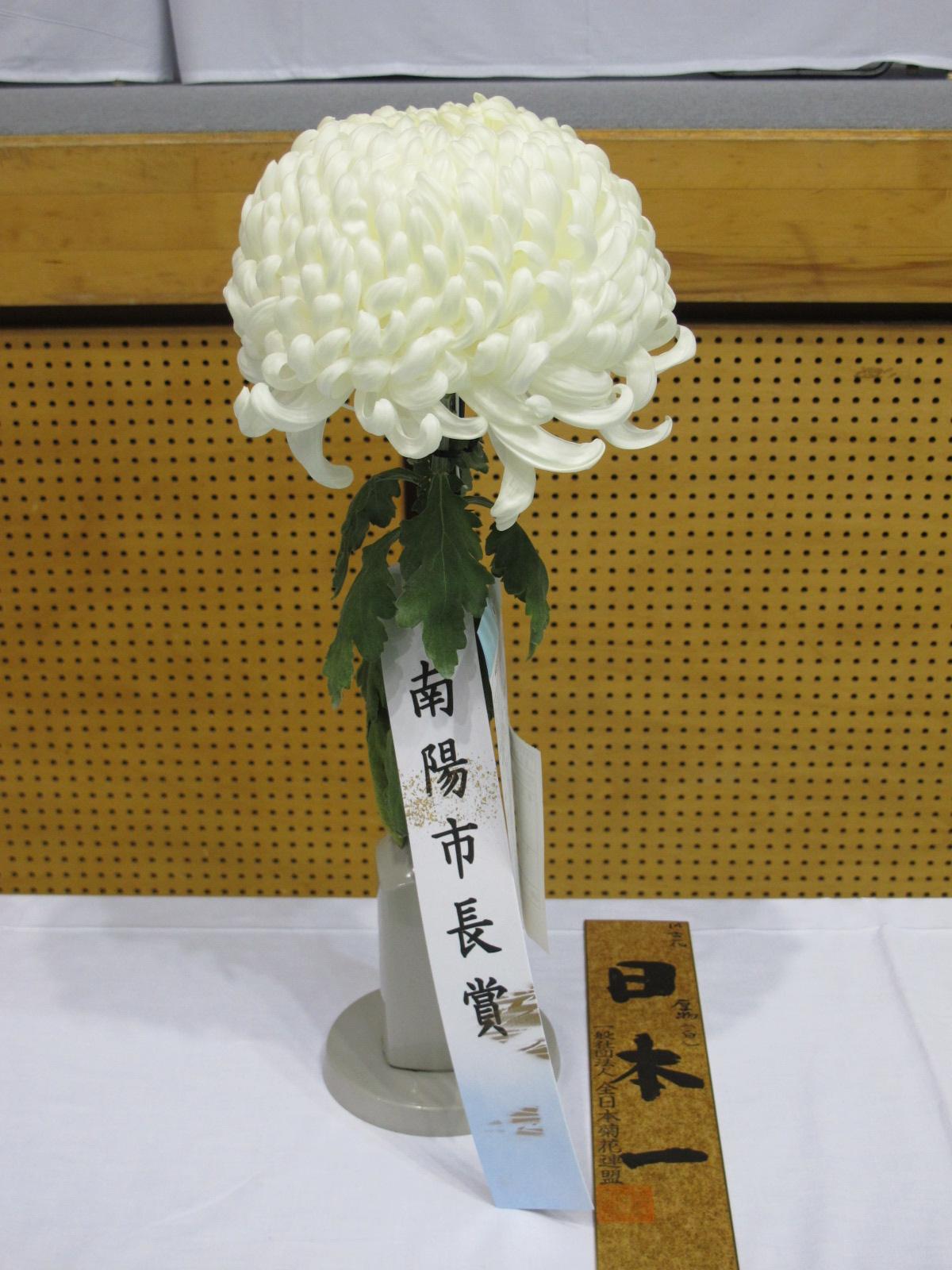 第100回 南陽の菊まつり展(11)_c0075701_20142141.jpg