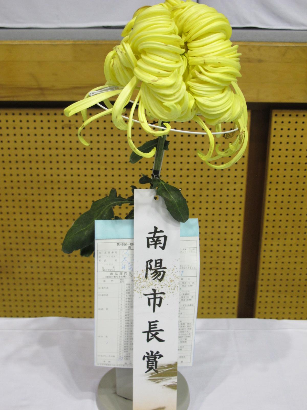 第100回 南陽の菊まつり展(11)_c0075701_20142515.jpg