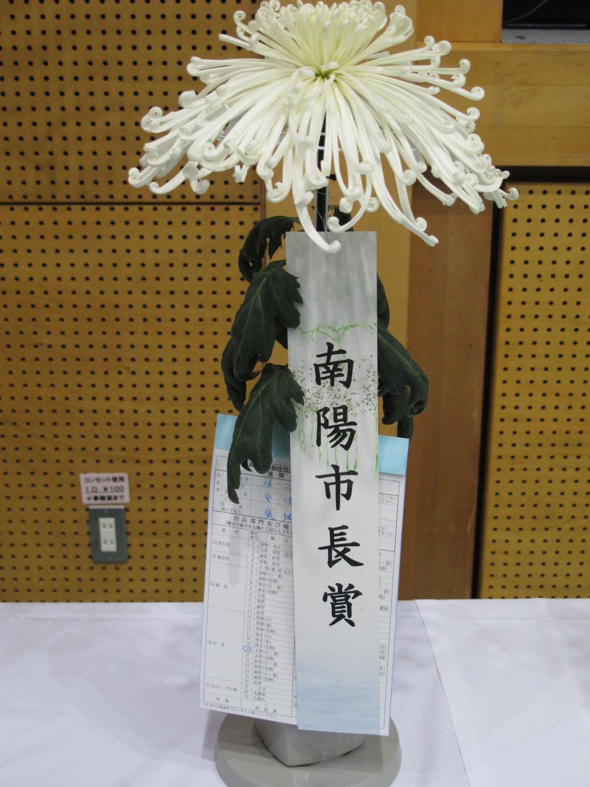 第100回 南陽の菊まつり展(12)_c0075701_20214518.jpg
