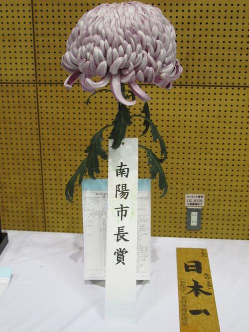第100回 南陽の菊まつり展(12)_c0075701_20215521.jpg