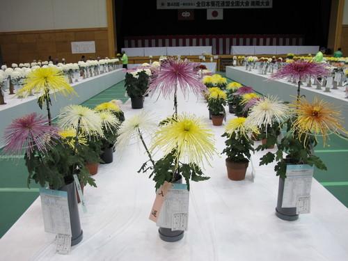 第100回 南陽の菊まつり展(17)_c0075701_20482298.jpg