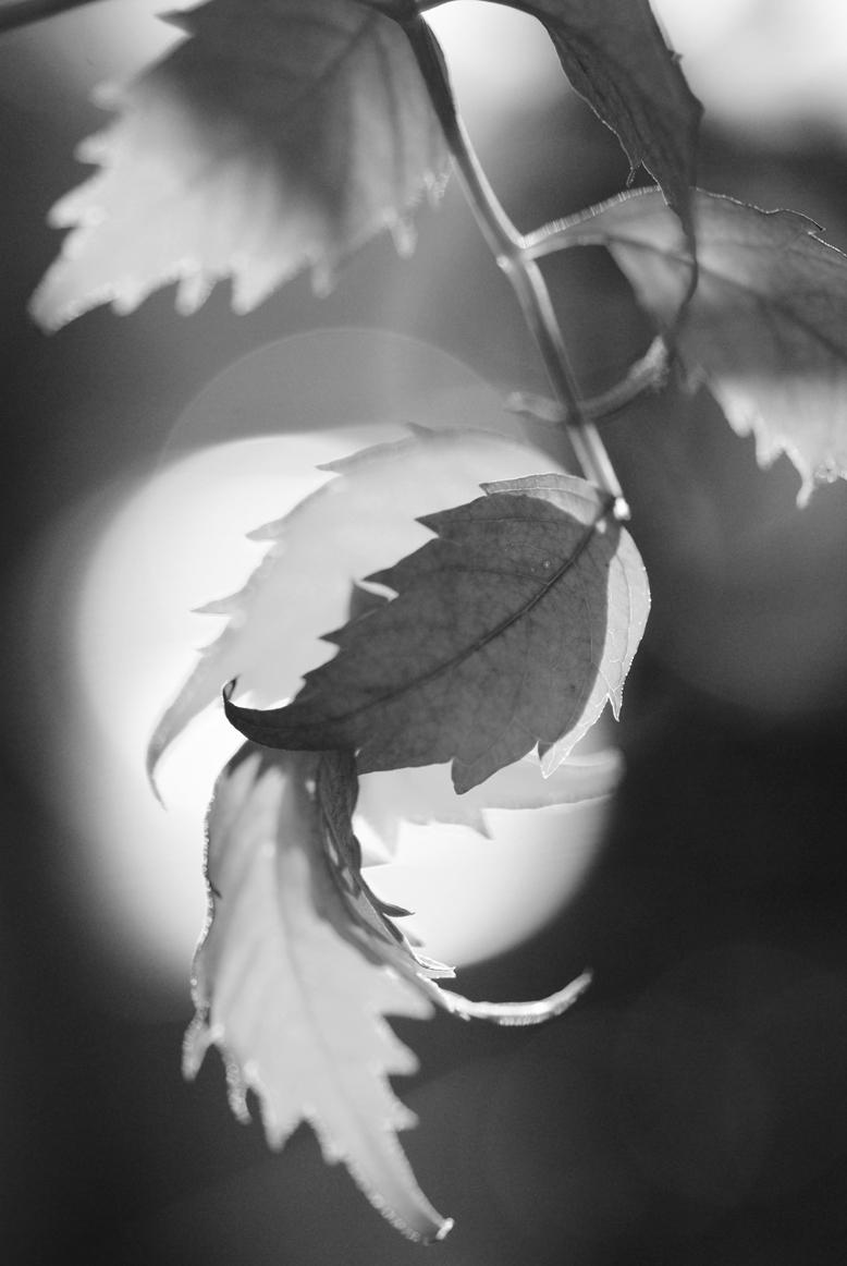秋の光/秋の色 #5_f0155808_1411208.jpg