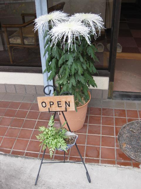 菊は菊でも_a0237010_17375072.jpg