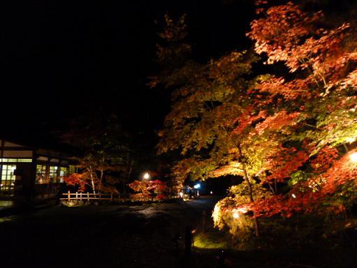 紅葉ノコロ とライトアップ 清水園_e0135219_13185135.jpg