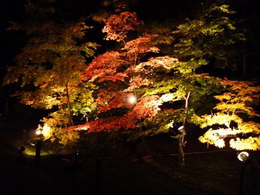 紅葉ノコロ とライトアップ 清水園_e0135219_13213254.jpg