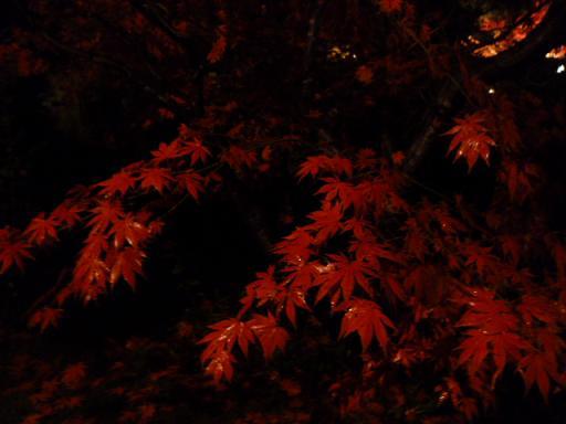 紅葉ノコロ とライトアップ 清水園_e0135219_13255344.jpg