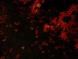紅葉ノコロ とライトアップ 清水園_e0135219_13293923.jpg