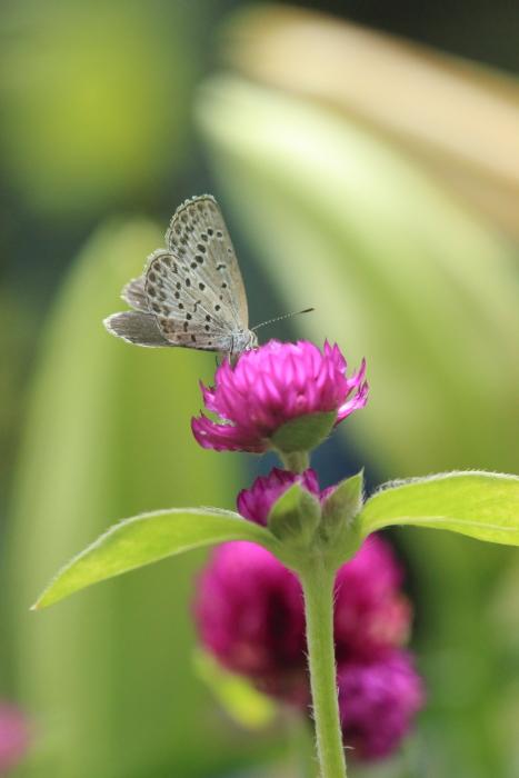 ■■ 狭いながらも愛しき My Garden ~3~ ■■_c0195662_2238588.jpg