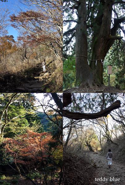 fall hiking in Oyama  秋の大山ハイキング_e0253364_138288.jpg