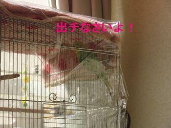 f0196665_1642077.jpg