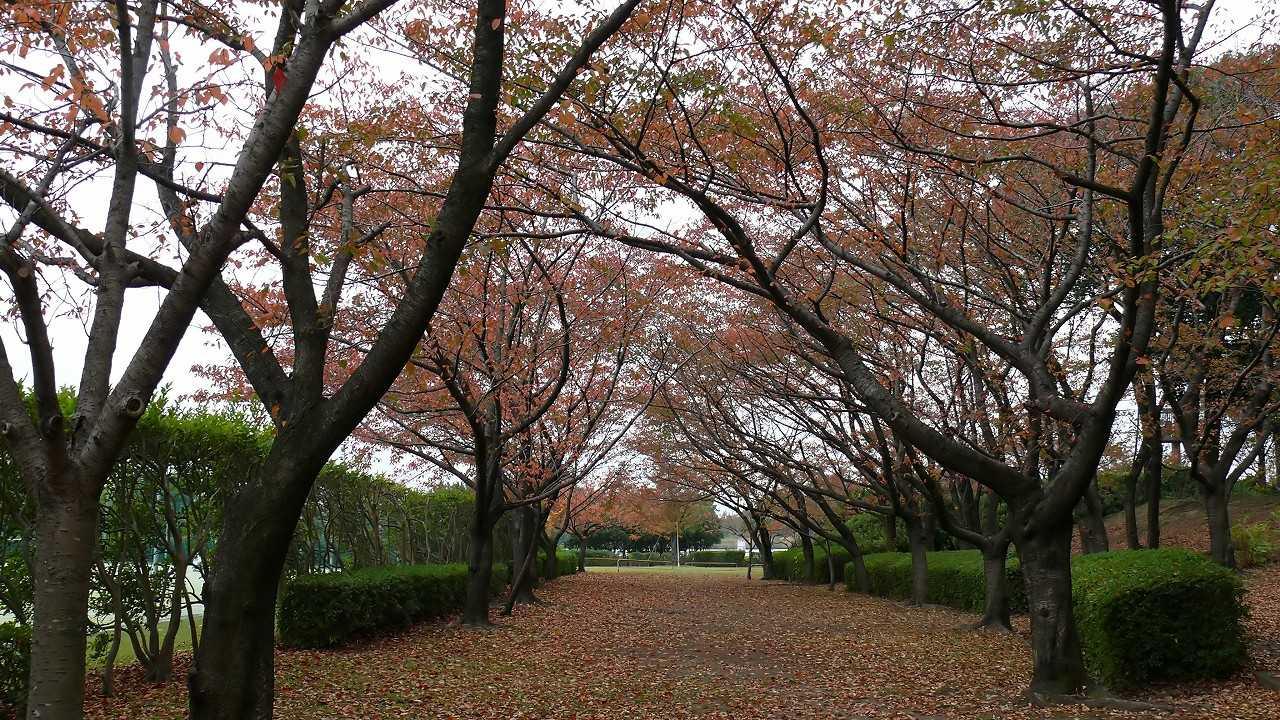 【 日記 11/11(日) 】 冬がはじまるよ_a0185081_1717599.jpg