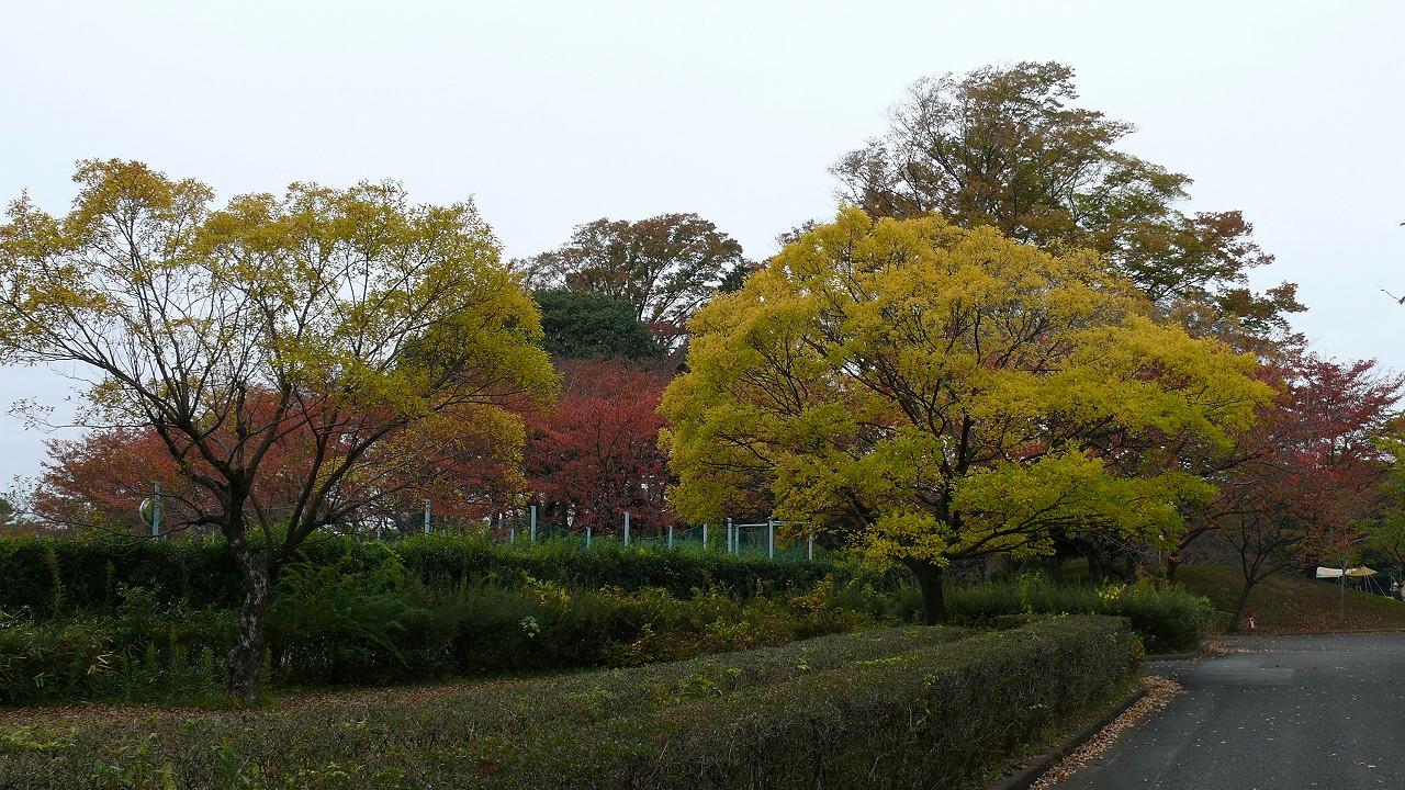 【 日記 11/11(日) 】 冬がはじまるよ_a0185081_1722651.jpg