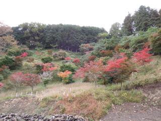 秋の七沢 森林セラピー_e0231387_19515722.jpg