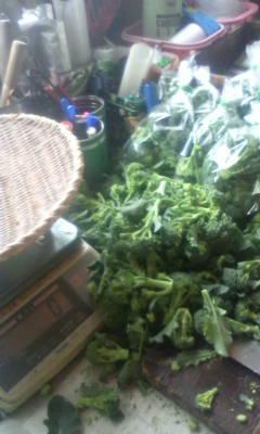 産直野菜の準備中です。_d0026905_9522099.jpg