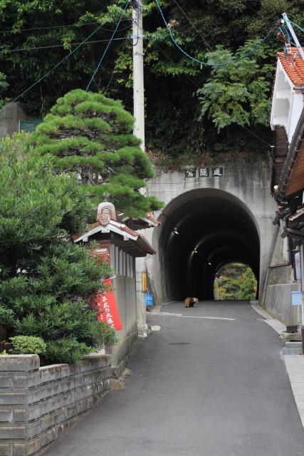 出雲市大社町鷺浦  鷺隧道、未来へのトンネル_b0061717_195195.jpg