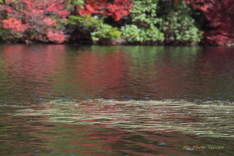 湖面_c0167028_23443760.jpg