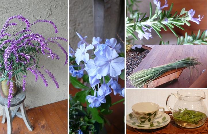 ブルー系の花たちとレモングラスのお茶_a0212730_736573.jpg