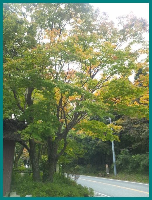 秋を感じる出来事_b0208246_1628867.jpg