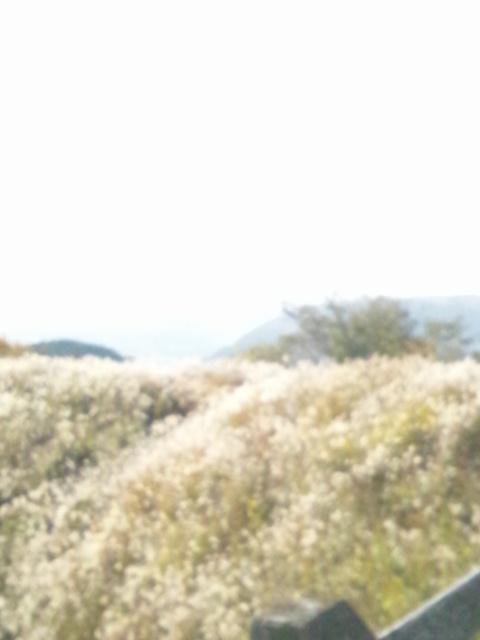 阿蘇神社とetuとtien tienと山ドライブ_c0246783_22422395.jpg