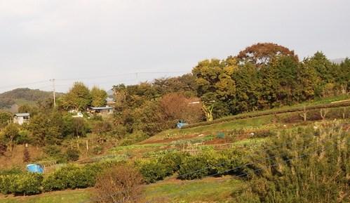 まい~ふあーむ...こんな菜園です。_b0137932_20381237.jpg