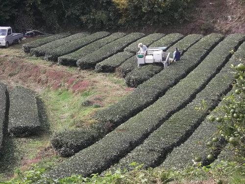 まい~ふあーむ...こんな菜園です。_b0137932_20451829.jpg