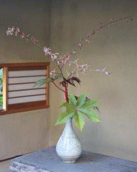 花だより_a0279848_14291.jpg