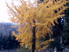 早朝に  秋の知らせ_a0274383_8562528.jpg