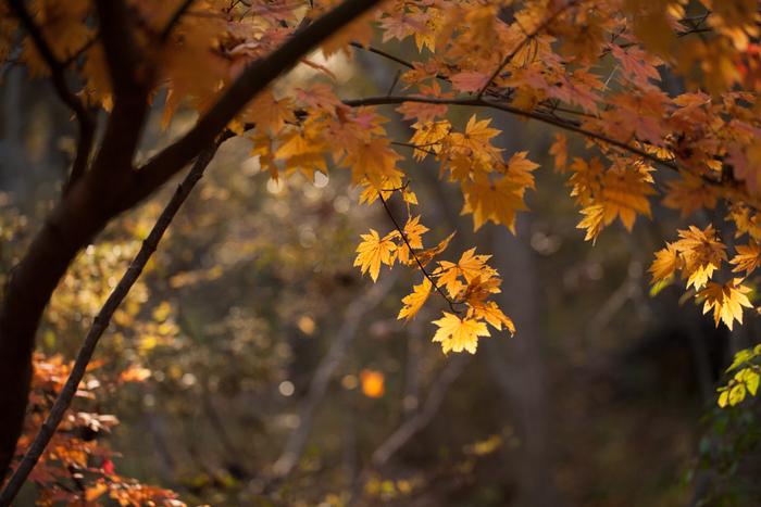 ヤマガラの冬支度_c0137403_1819352.jpg