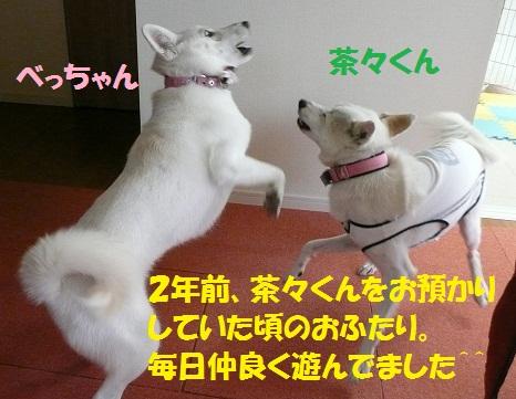 f0121712_1584122.jpg