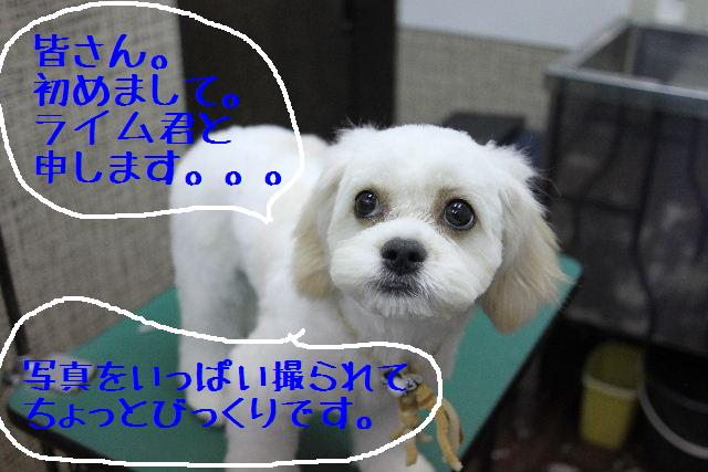 b0130018_14104873.jpg