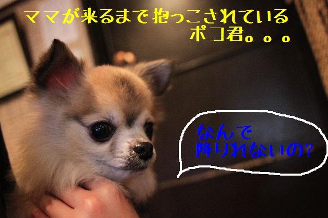 b0130018_1461573.jpg
