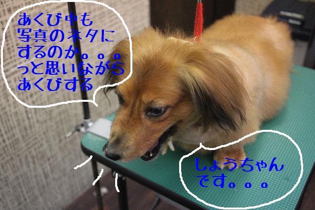 b0130018_148597.jpg