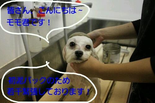 b0130018_1644531.jpg