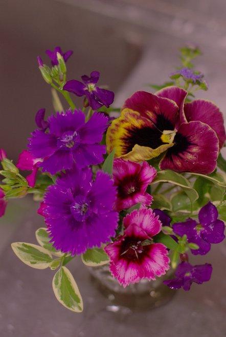 庭に咲いてる花を飾る_e0171336_21221863.jpg