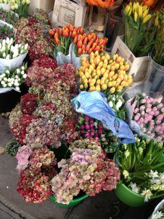 花で溢れたLONDON_f0061394_20264250.jpg