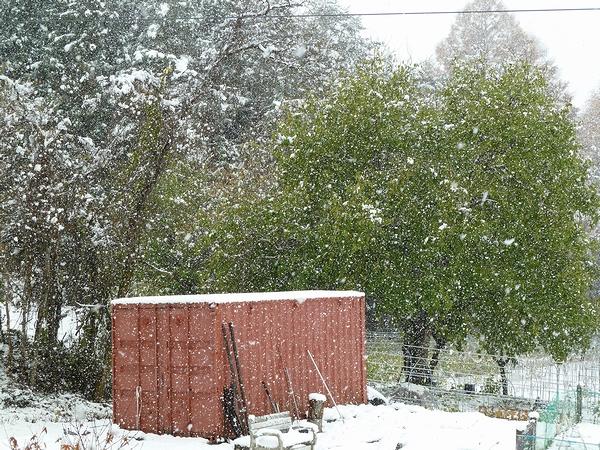 雪だど~~~!_c0127703_22483458.jpg