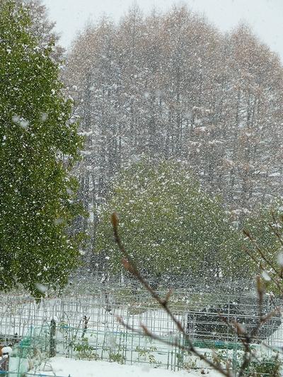 雪だど~~~!_c0127703_22491573.jpg