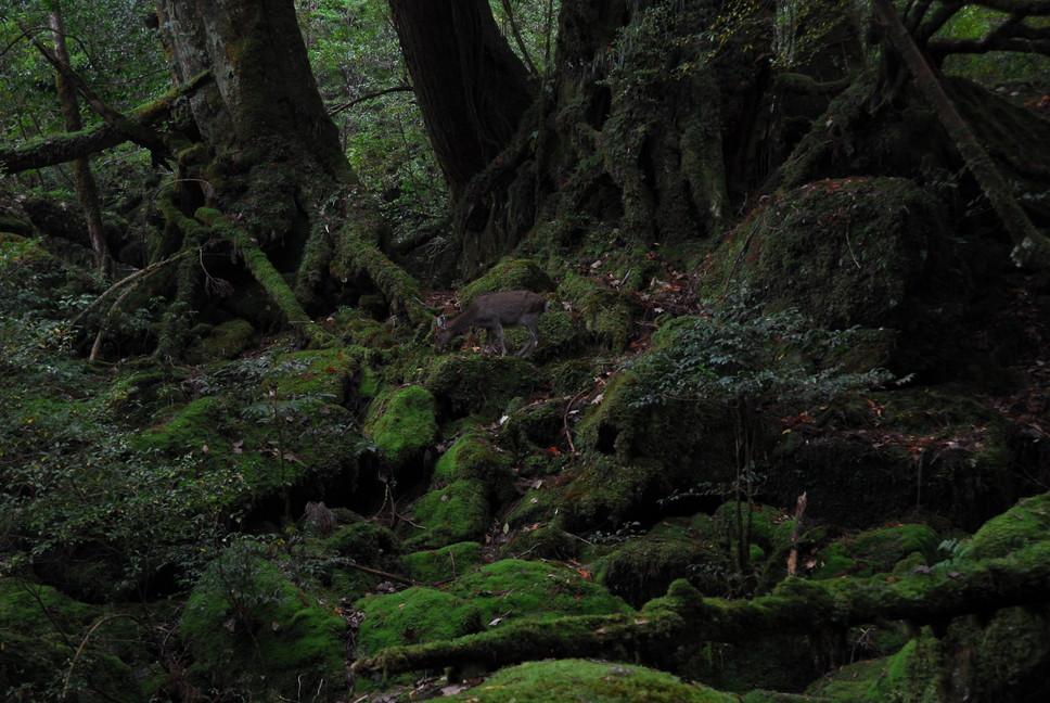 2012年10月、11月 『広島から、鹿児島へ、そして憧れの屋久島宮之浦岳』_c0219616_21543032.jpg