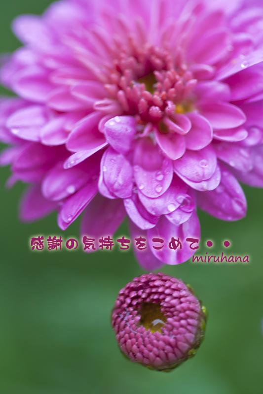 c0037519_1413781.jpg